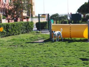 elementos de parque de perros